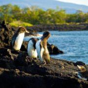 Gorgeous penguins
