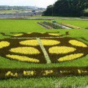 Ladybug. Rice art