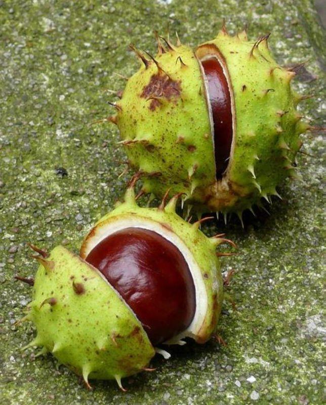 Lovely chestnuts