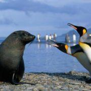 Penguins vs sea leopard