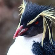Pretty penguin