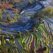 Pretty rice terraces