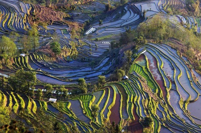Pretty rice terraces