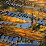 Stunning rice terraces