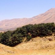 Wonderful cedars
