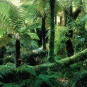 Amazing fern