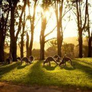 Australia is the dream of any traveler