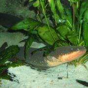 Cute eel