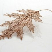 Cute leaves made of human hair by Jenine Shereos