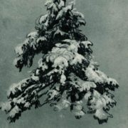Ivan Ivanovich Shishkin. Pine under the snow. 1890