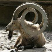 Stunning horns
