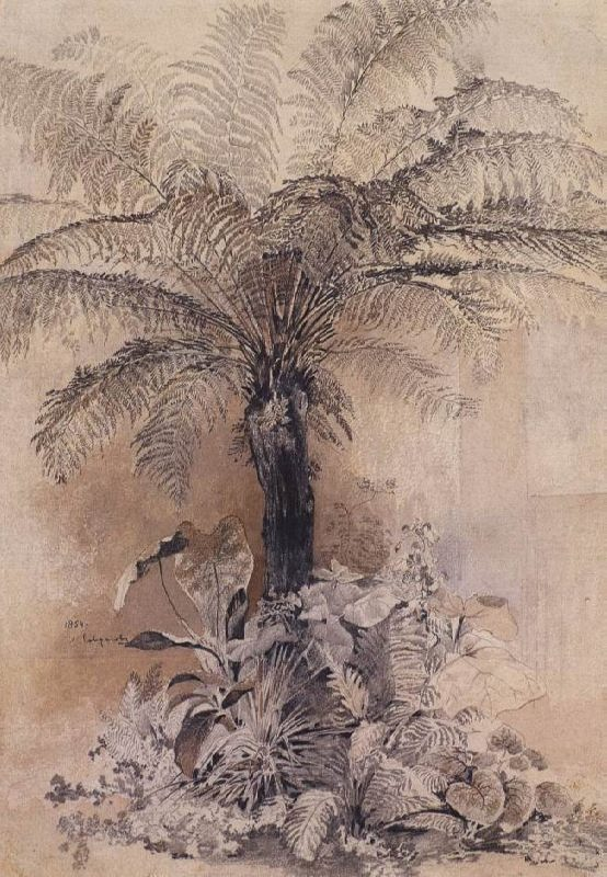 Tropical plants. The treelike fern. Alexey Savrasov