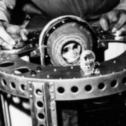 Albert, monkey in spacesuit
