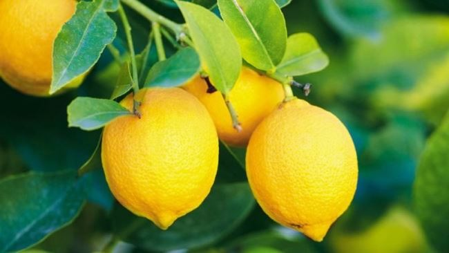 Amazing lemon
