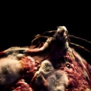 Beet mold by Heikki Leis