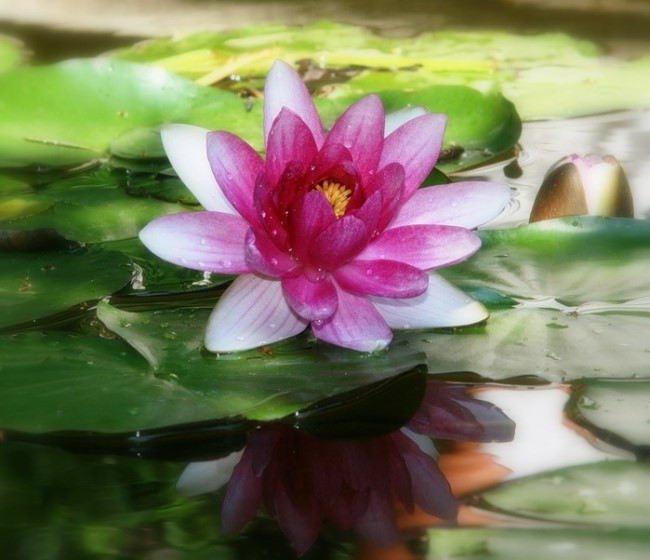 Interesting lily