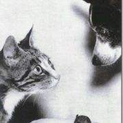 Mark Andrew's pets