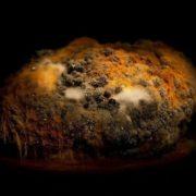 Moldy rutabaga by Heikki Leis