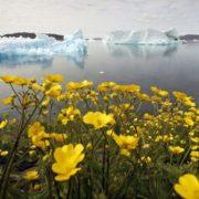 Attractive Greenland