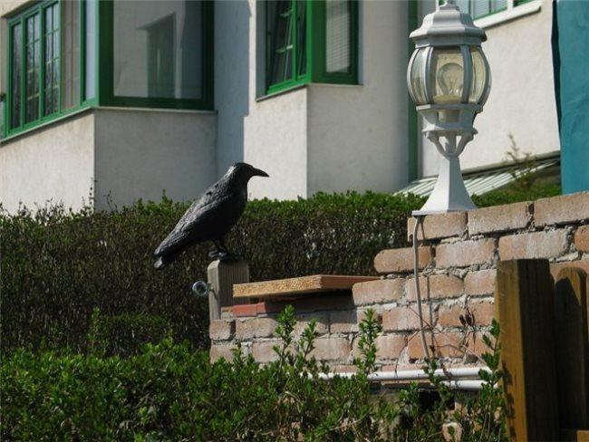 Awesome crow