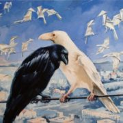 Black and white crows