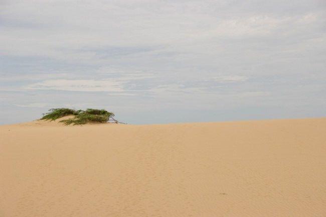 Cape Gallinas
