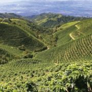 Coffee plantations in Colombia