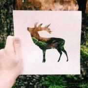 Deer by Nikolai Tolstykh