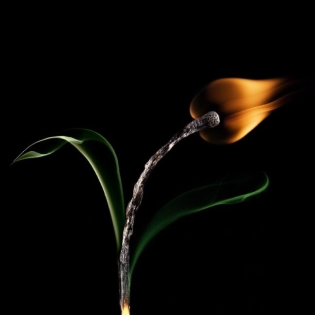 Wonderful fire flower