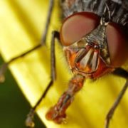 Amazing fly