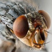 Awesome fly