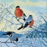 Beautiful bullfinches