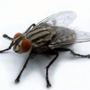 Gorgeous fly