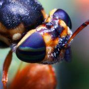 Strange fly