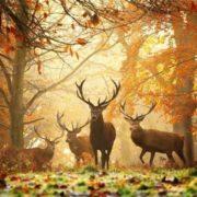 Attractive deer