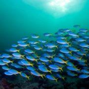Attractive underwater world
