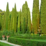 Awesome cypresses