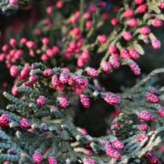 Charming cypress