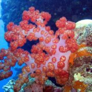 Charming underwater world