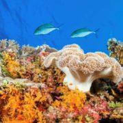 Gorgeous underwater world