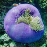 Great underwater world