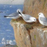 Gulls on the rock