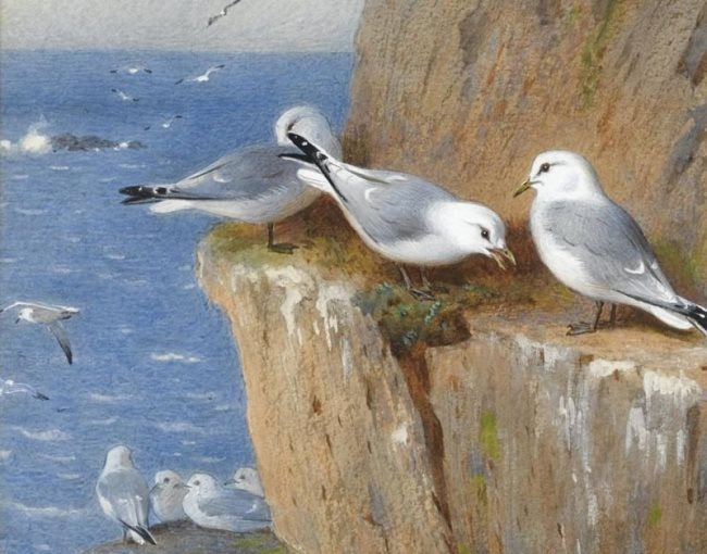 Gulls on the rock