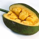 Jackfruit – Largest Tree-Borne Fruit