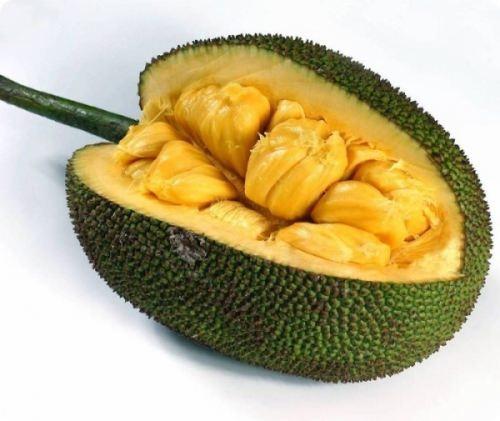 Jackfruit - Largest Tree-Borne Fruit