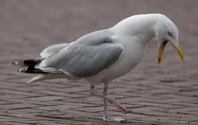 Lovely gull