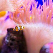 Lovely underwater world