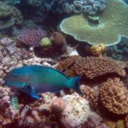 Magnificent underwater world