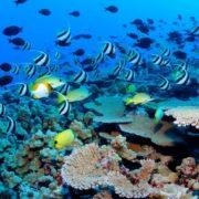 Pretty underwater world