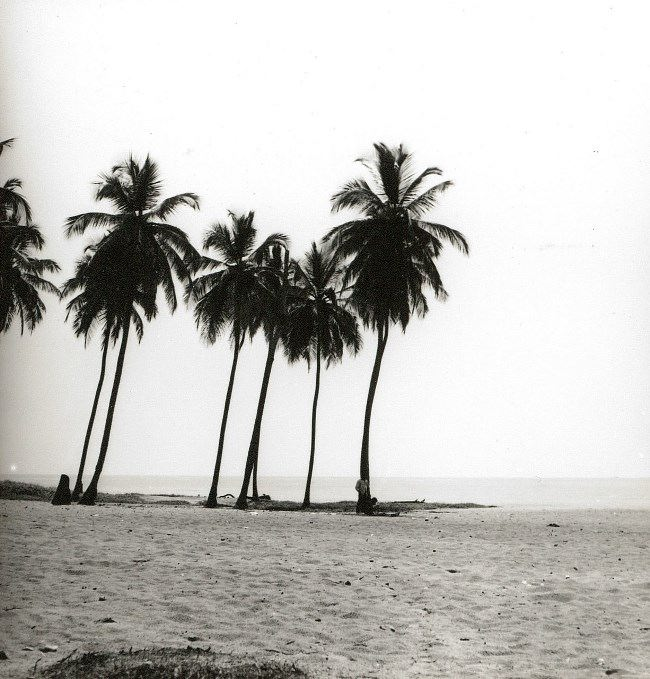 The Atlantic coast. Coconut palms on the beach. Gerhard Vetter, 1960